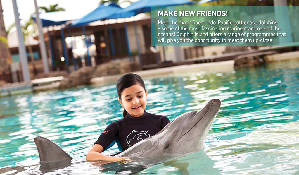 meet a dolphin