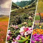 flower valleys