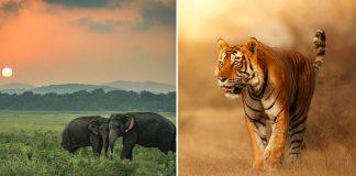 wildlife parks in maharashtra
