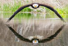 Picture Of An Eagle Is The Photo Of The Year