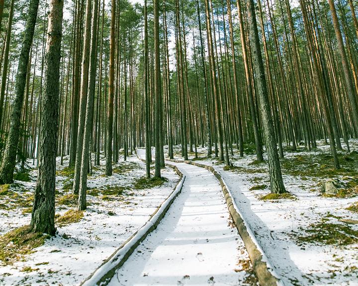 Springtime Frost In Estonia