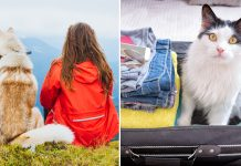 Personalise Your Suitcase With Your Pet's Face