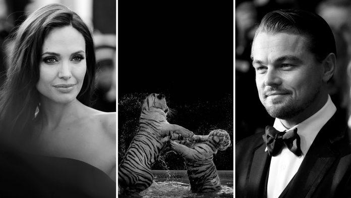 Celebrities Saving The Planet