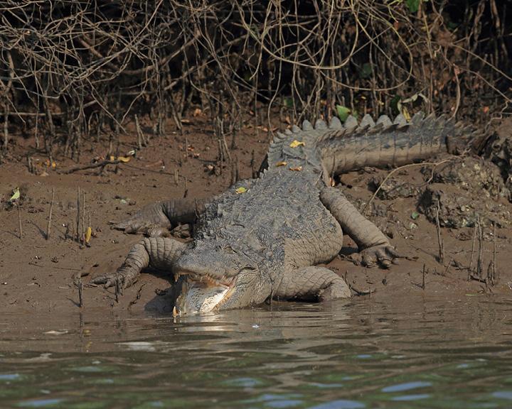 Wetlands of Goa