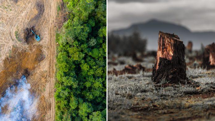 Norway Bans Deforestation