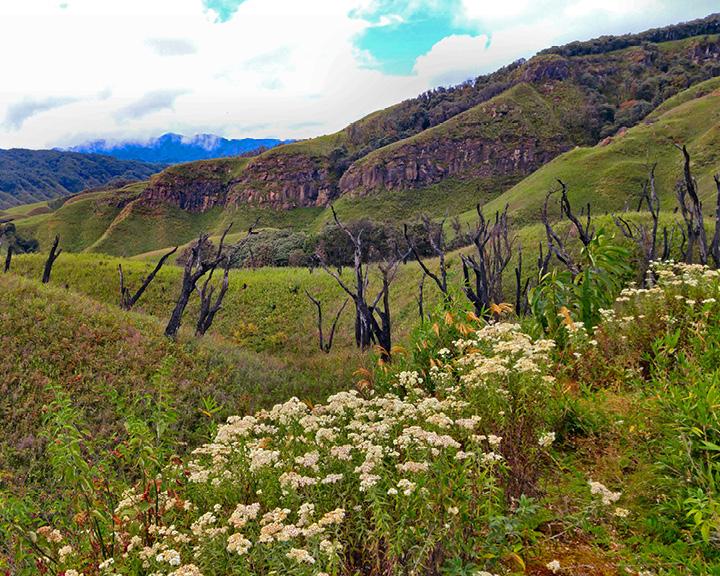 Trek Through Dzukou Valley