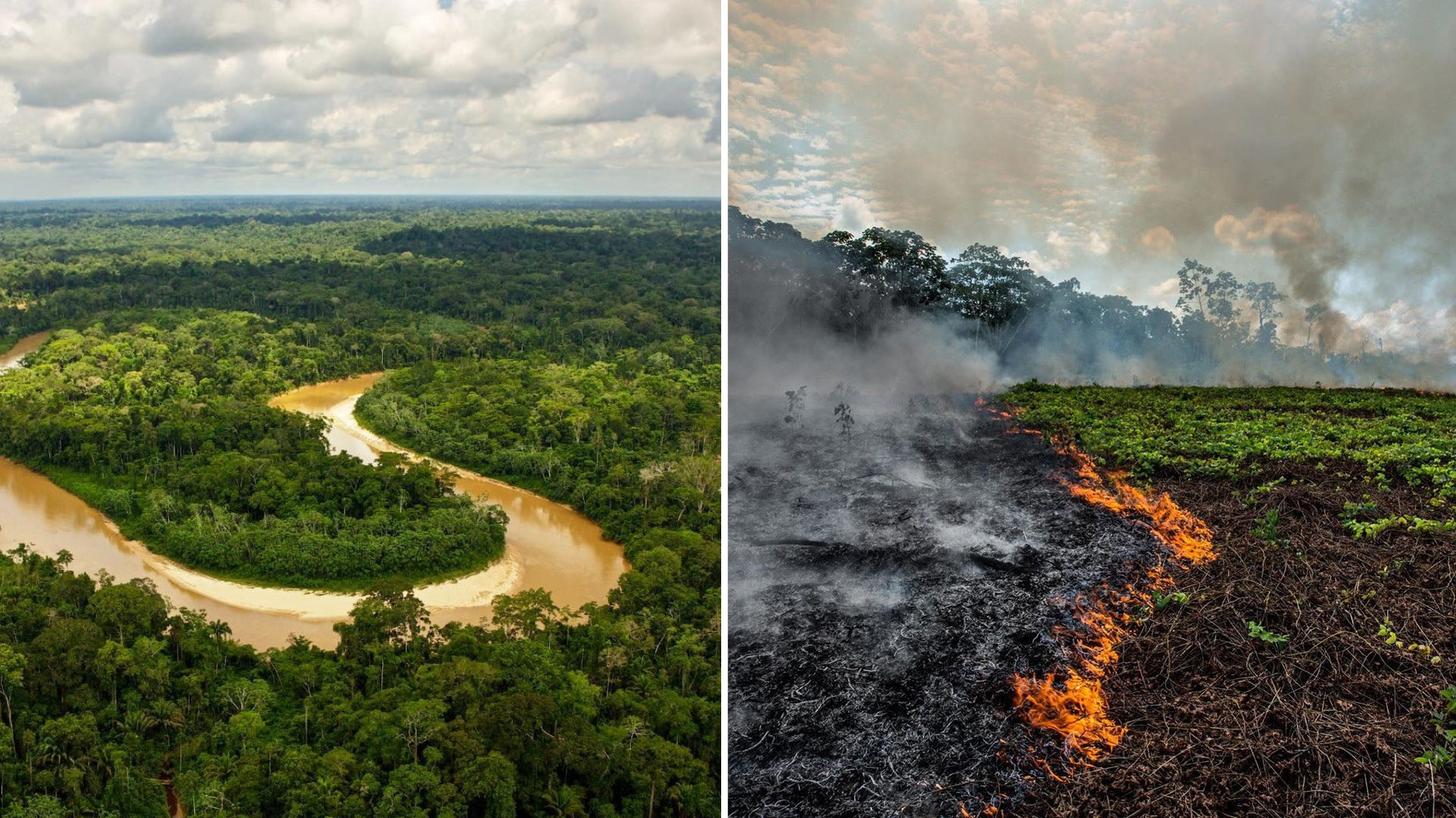 The Amazon Rainforest Is Screaming Here S Why You Should Listen