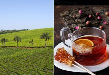 South Africa's Rooibos Tea
