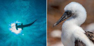 Galápagos Islands Latika Nath
