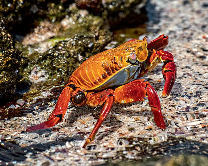 Galápagos Islands Images