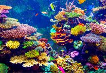 Coral Reefs Disappear