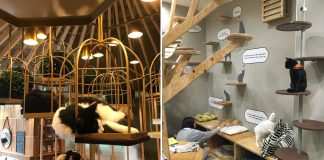 Pet-Friendly Cafes in Tokyo