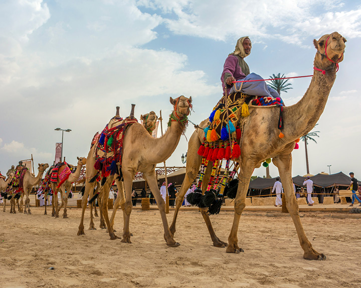 Crown Prince Camel Festival