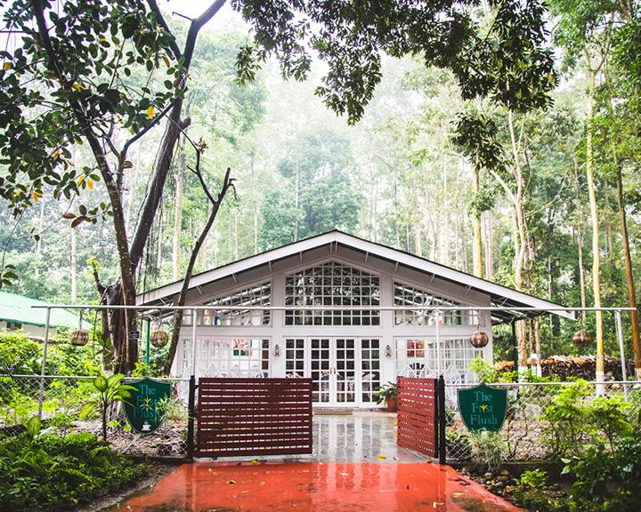 Tea Trail In Assam