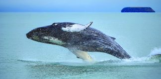 Whale Watching Hotspots