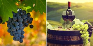 Vineyards And Wineries In India
