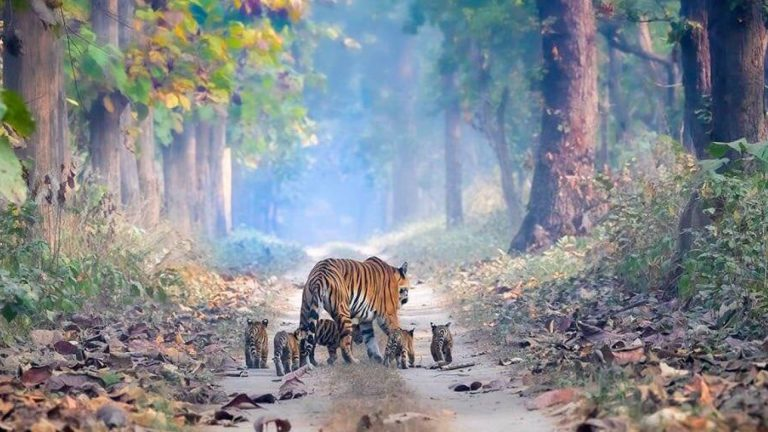 This Touching Photo Instills Hope About India's Rising Tiger Population