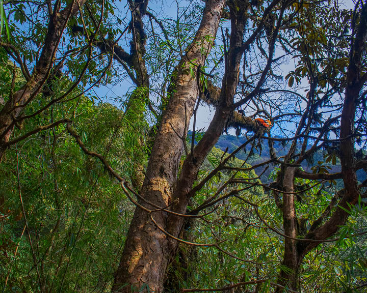 Singalila National Park