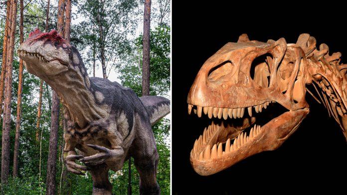 Allosaurus Discovered In Utah