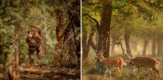 Wildlife Hotspots In India