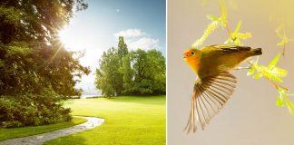 Rare Himalayan Birds