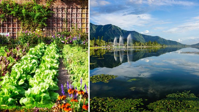 Srinagar To Make Kitchen Garden Mandatory For Residents To Tackle Emergencies