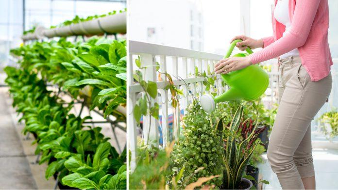 Indian Urban Farming