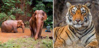 World Environment Day Wildlife Conservation