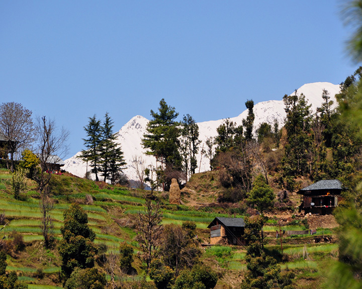 Himachal Pradesh's Barot