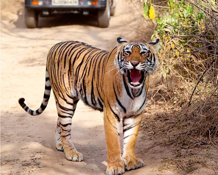 roadtrips from jaipur