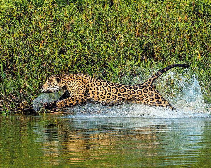 steve winter jaguars
