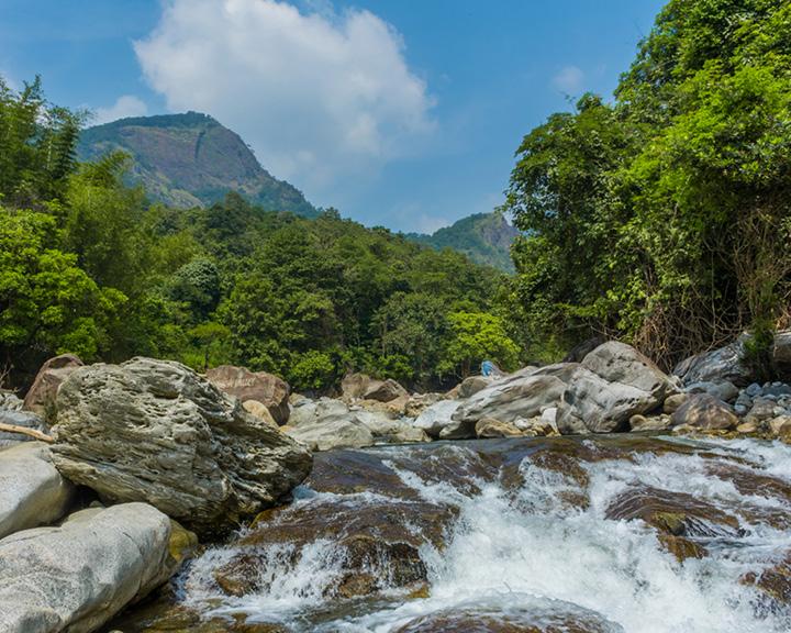 Kerala Rainforest