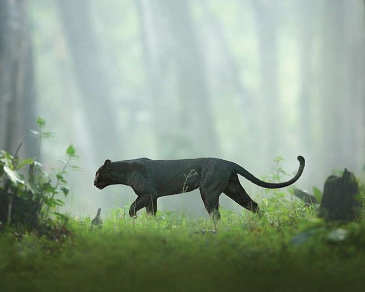Images Of Black Panther