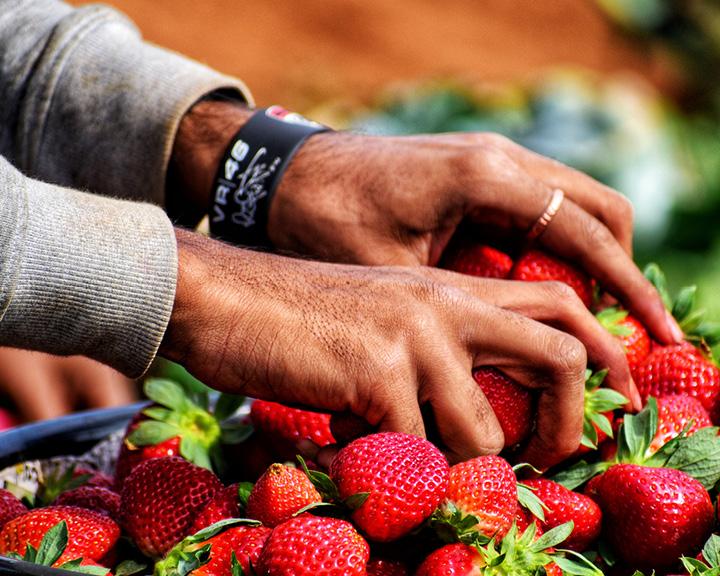 Panchgani Strawberry