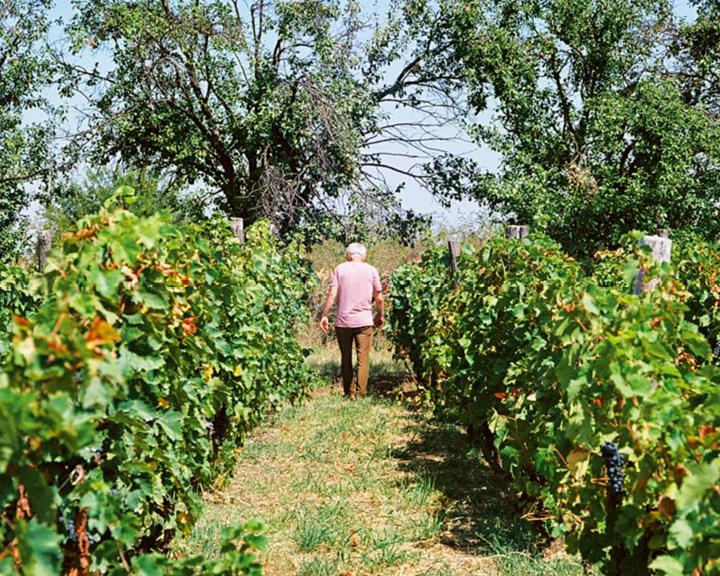 Winemaker Cyrille Bongiraud and his vines at Francuska Vinarija