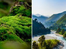 Moss Garden in Uttarakhand