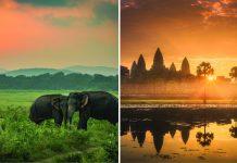 Loneliest Elephant
