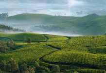 Tea Estates In India